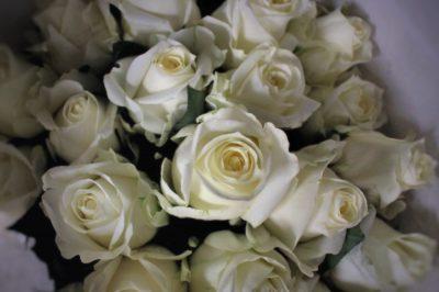 whiterose,白いバラ