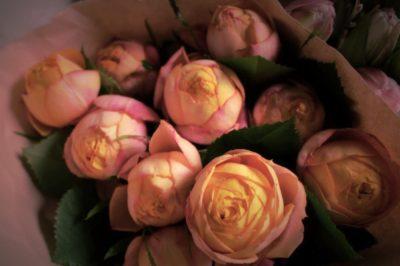 Rose, 薔薇,バラ