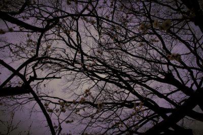 photo,ume,kyoto