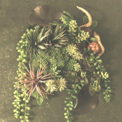 art-succulent-design-2015