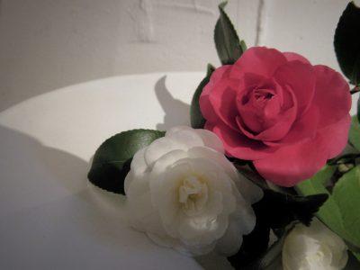 sazannka,山茶花,一輪の花