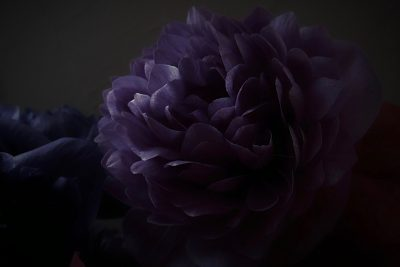 八重のアネモネ,anemone,Bouquet