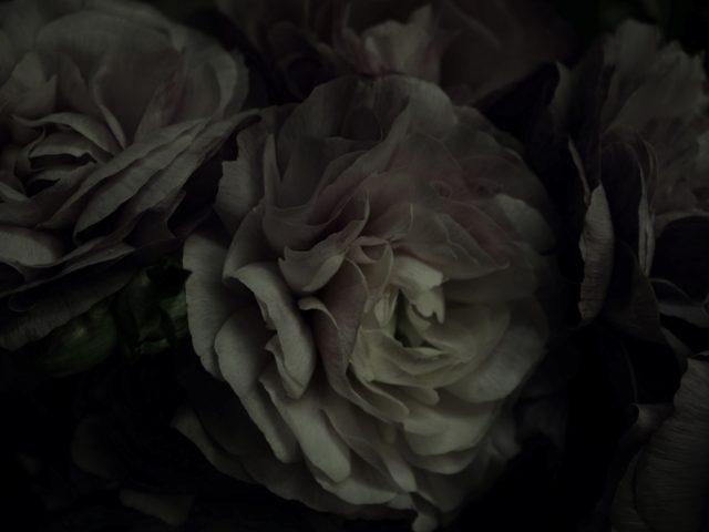 花,ラナンキュラス,flower