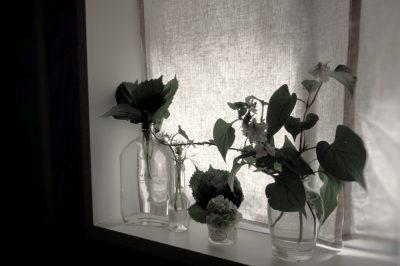 一輪の花,fleurs