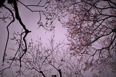 梅,春,京都御所