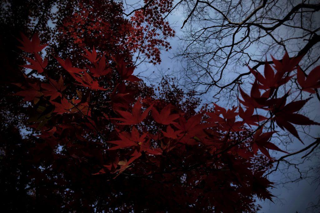 京都御苑,秋の紅葉,紅葉