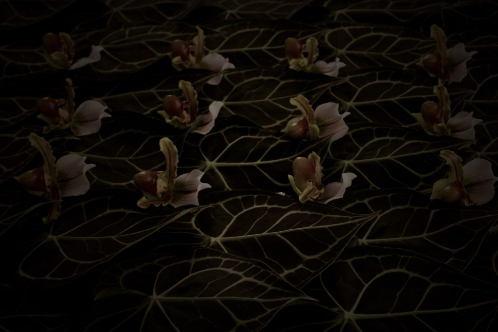 photo,orchid,leaf