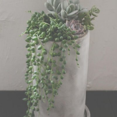 多肉植物,succulent