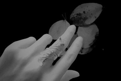 hand,Love,leaf