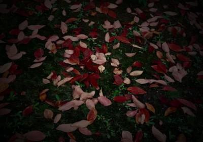 紅葉,秋,写真