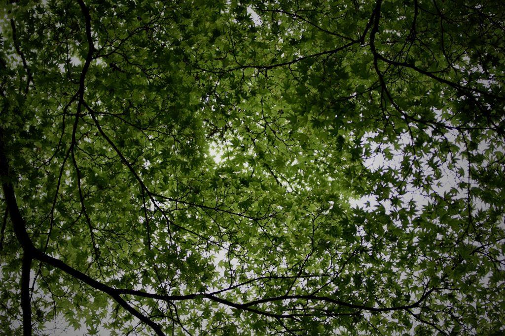 新緑,夏,初夏
