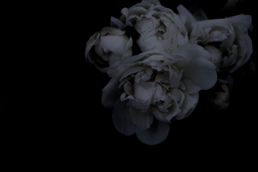 shakuyaku,芍薬,flower