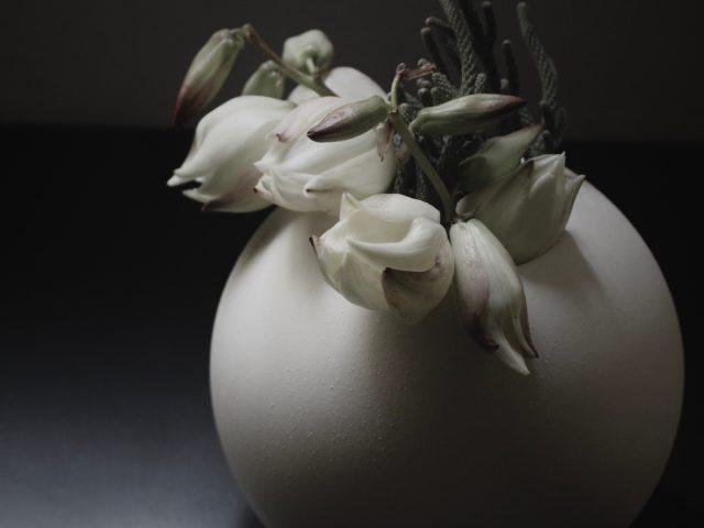 竜舌蘭,花の陰影