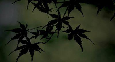 立秋 ,紅葉,momiji
