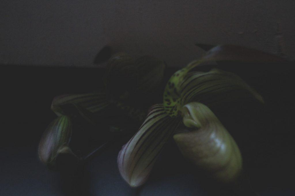 625地震,orchid