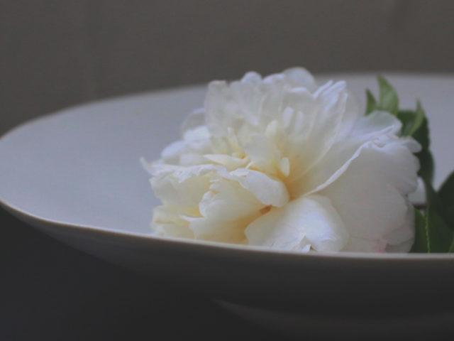 椿、山茶花