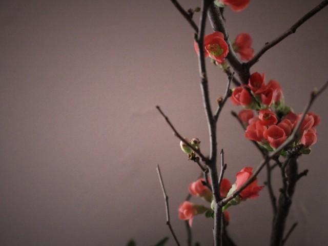 お正月,枝,花