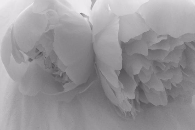 Fleur Flower white