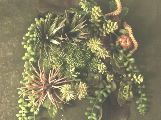 art-succulent-design-2015
